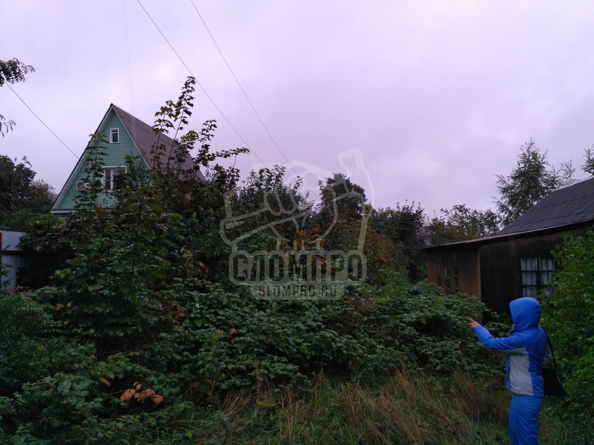 Фото нежелательной растительности на участке до расчистки
