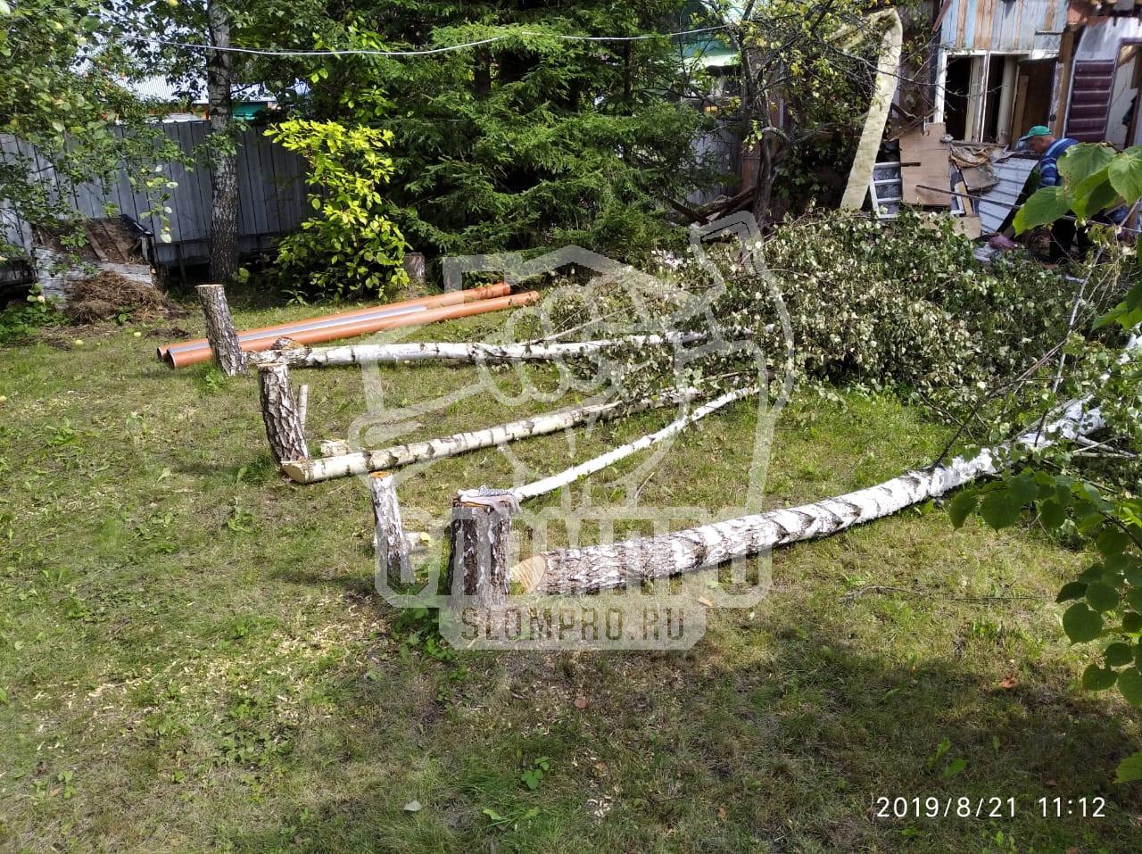 Спиленные деревья приготовлены к корчеванию